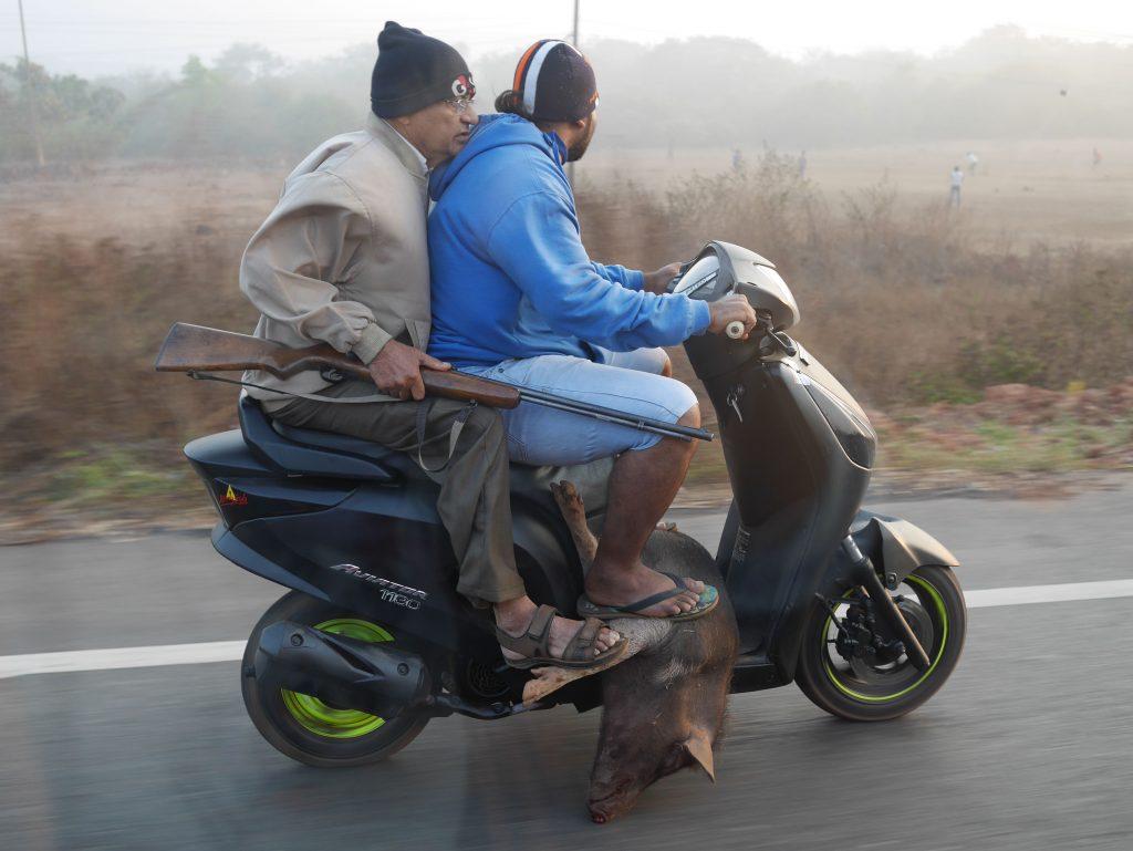 Élő állat szállítás