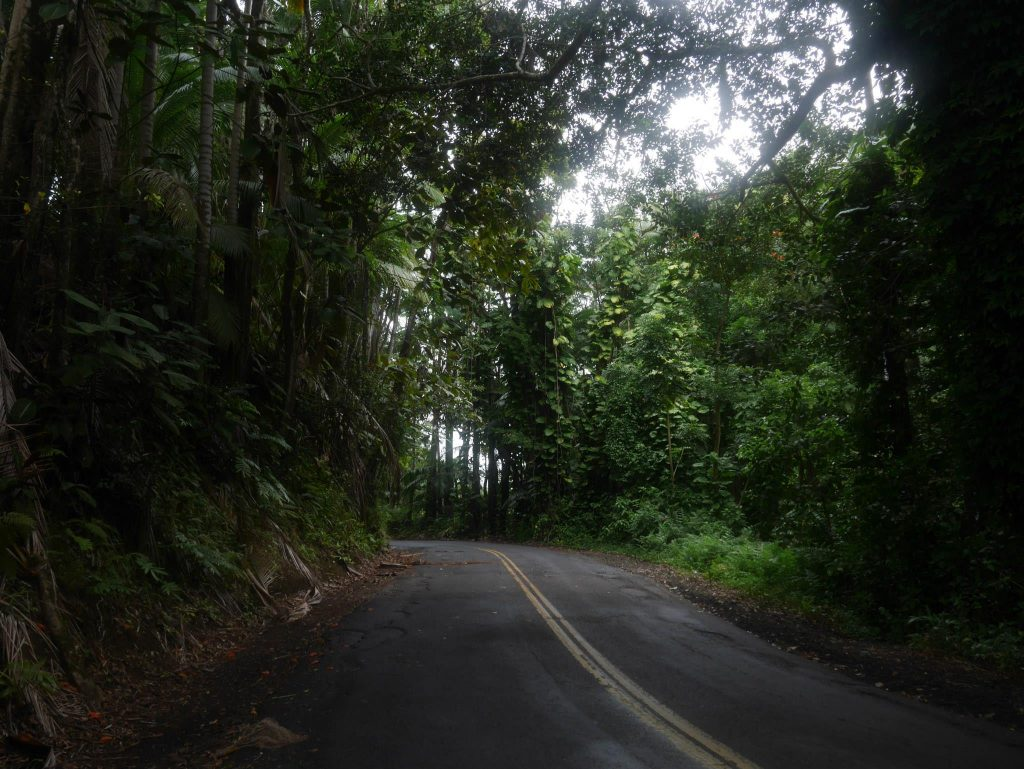 Esőerdőn át