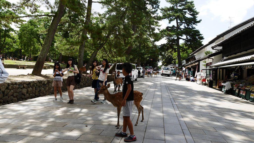 Nara - szarvasok