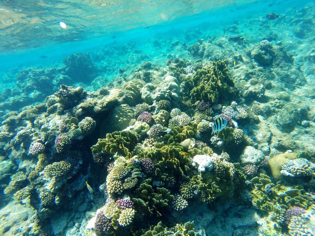 Vörös tenger - Makadi