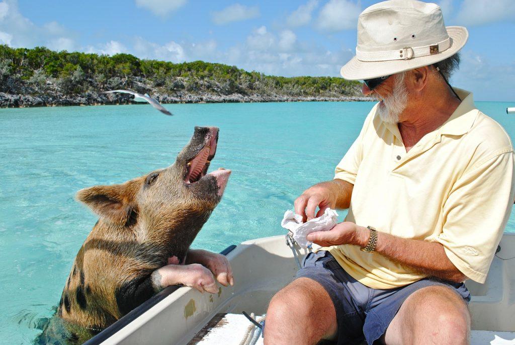 bahama pig beach