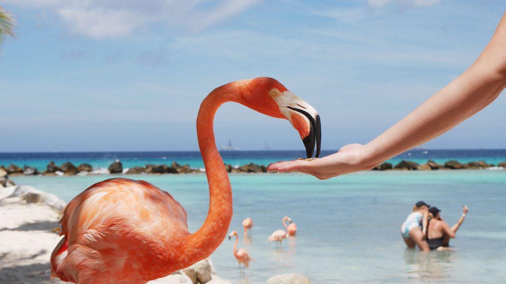 Álomutazás: 11 nap Aruba szállással és repülővel 238.000 Ft-ért!