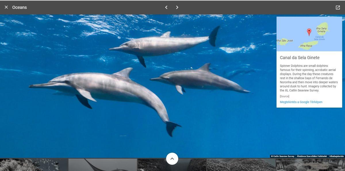 google ocean2