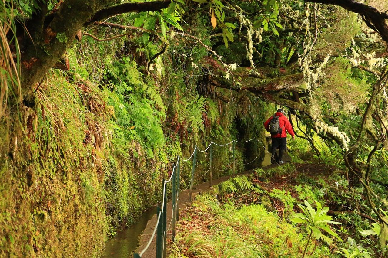 Madeirai levada túra Portugália #884d2470-c94f-4691-8410-db1bebf8770d
