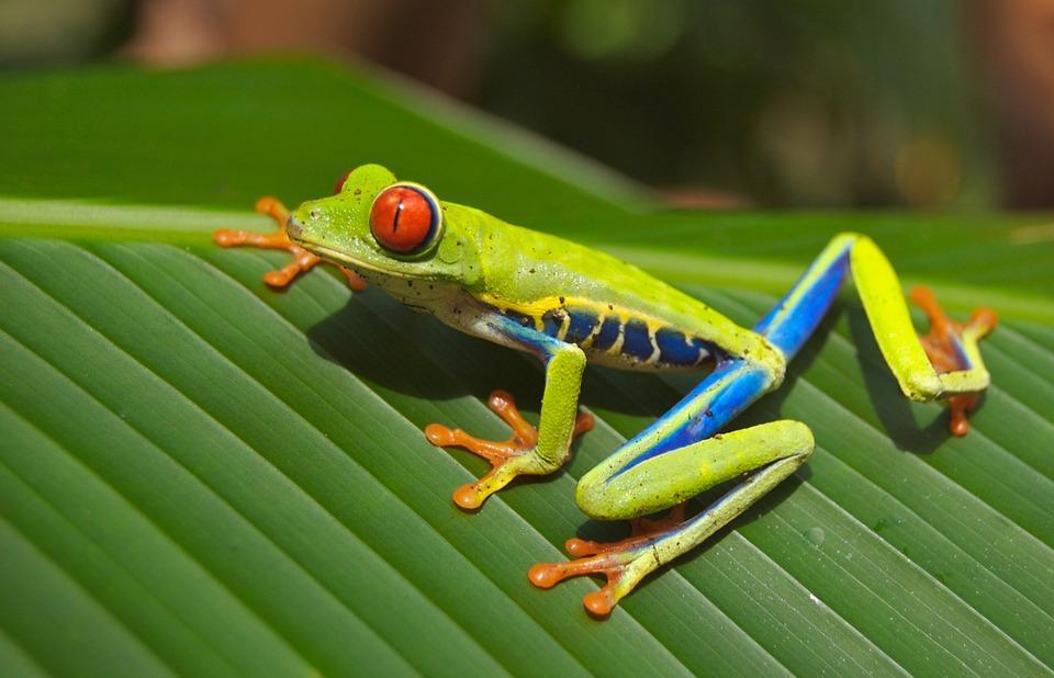 9 nap Costa Rica, San José, 4 csillagos szállással, reggelivel és repjeggyel