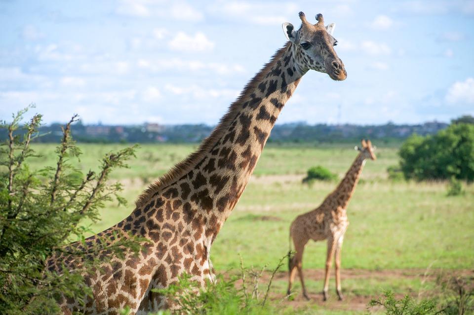Voltál már szafarin? Irány Kenya, Nairobi, 9 nap, 4 csillagos szállással és repjeggyel: 235.000 Ft-ért!