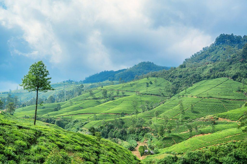 10 napos utazás a sokszínű Sri Lankára szállással és repülővel 193.500 Ft-ért!