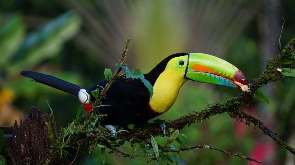 12 napos utazás a világ egyik legszuperebb országába, Costa Rica-ba 252.700 Ft-ért!