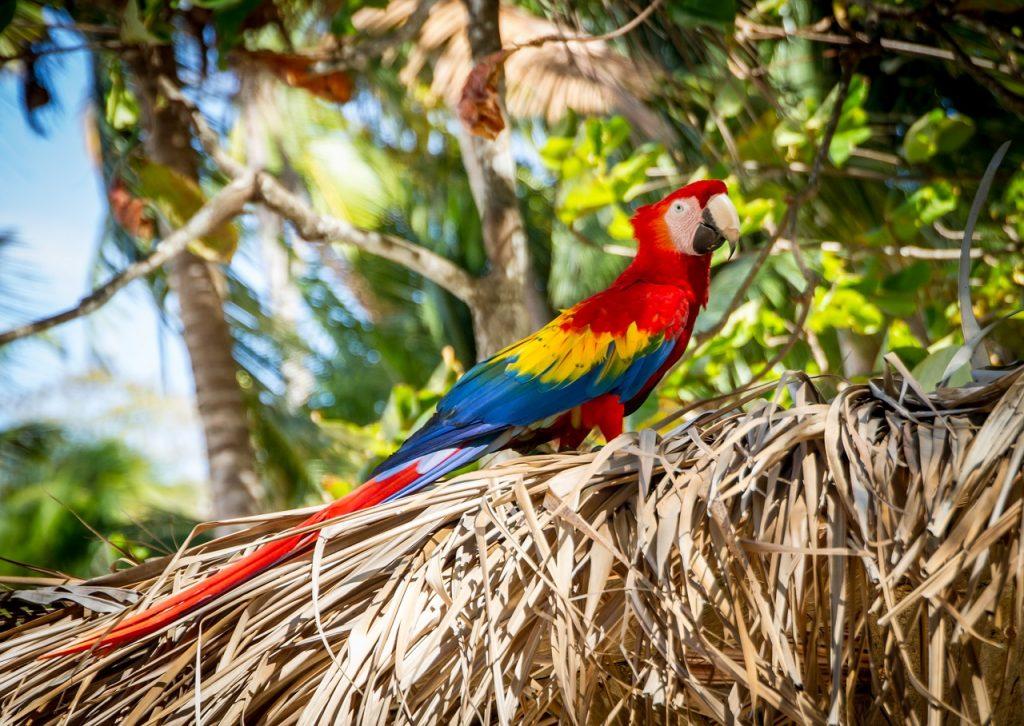 Várnak az állatok: 10 nap Costa Rica 238.000 Ft-ért!