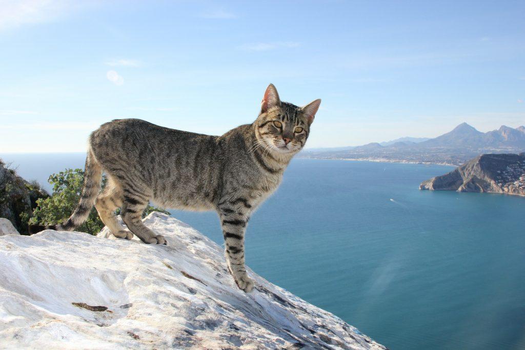 5 nap Alicante közvetlen tengerparti kiváló értékelésű hotelben, repülővel 38.800 Ft!