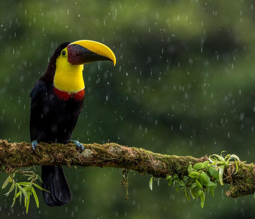 Életre szóló 10 napos utazás Costa Rica-ra 238.400 Ft-ért!