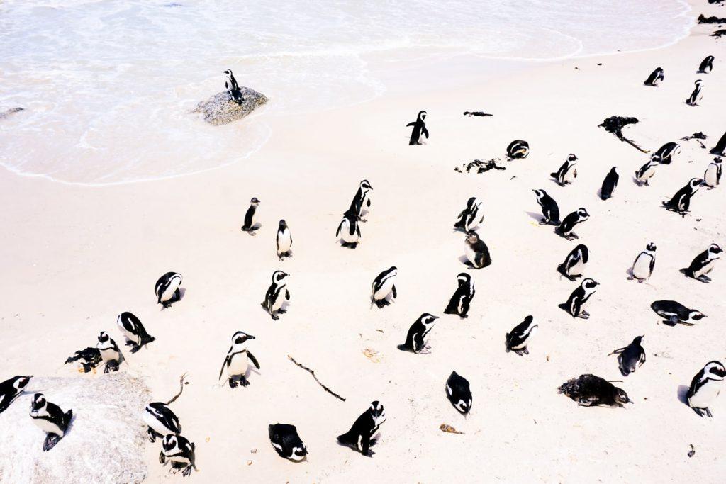 Télből nyárba: Napozz pingvinekkel Fokvárosban 220.500 Ft-ért!