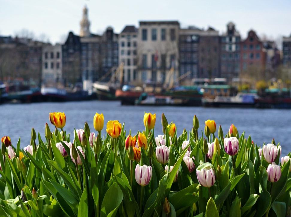 Irány a színes tulipánok országa: 5 napos városlátogatás Amszterdamban 71.300 Ft-ért!