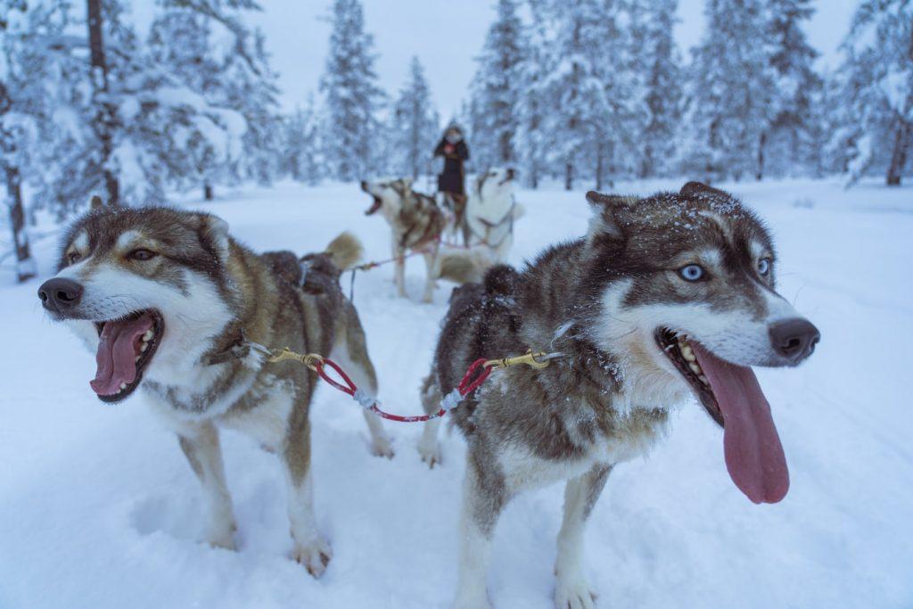 8 nap Norvégia, Lillehammer 103.380 Ft-ért! Síparadicsom, husky szánozás, Hunderfossen jéghotel!