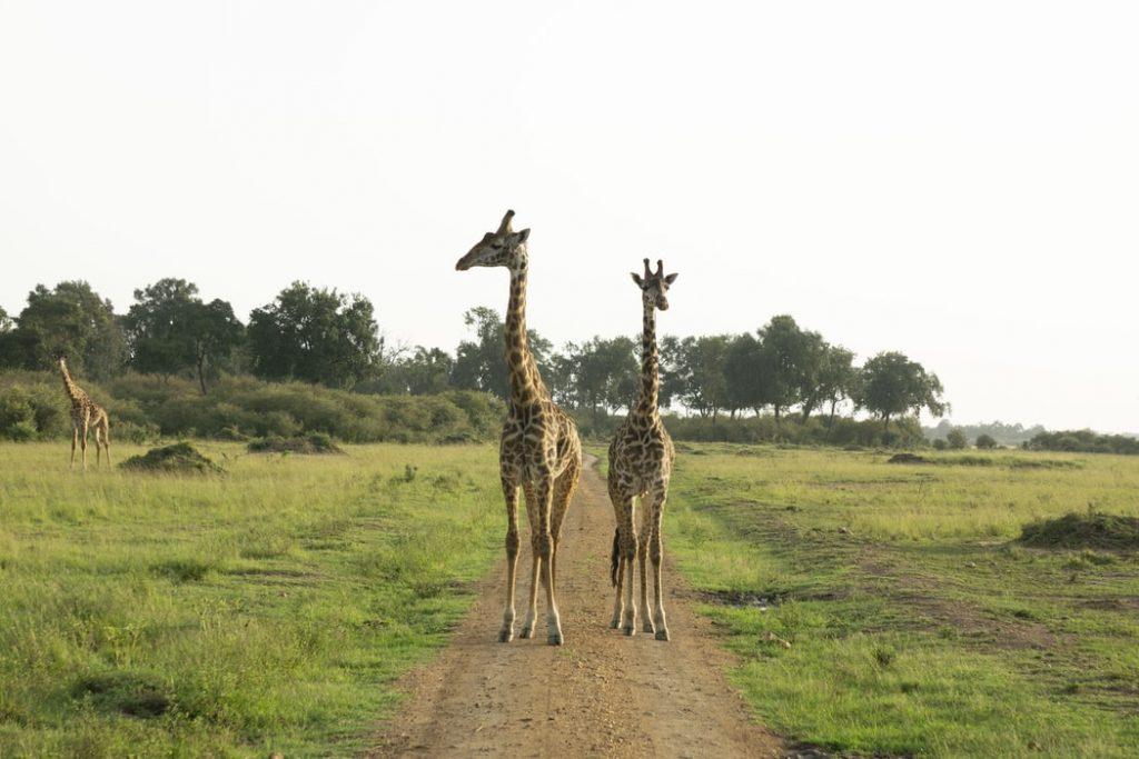 Szafarizz Kenyában! 9 nap szállás és repülőjegy Nairobiba 192.000 Ft-ért!