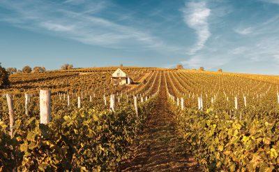 Bor, túra, kaland – hétvégi programok őszi napokra Magyarország borvidékein
