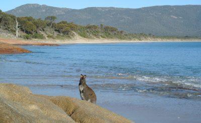 108-117. nap 3.rész: Így tudsz olcsón utazni Ausztráliában