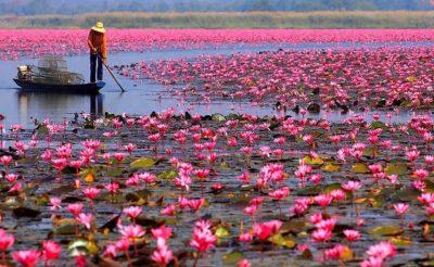 Minden évben ilyenkor rózsaszínben pompázik ez a thaiföldi tó