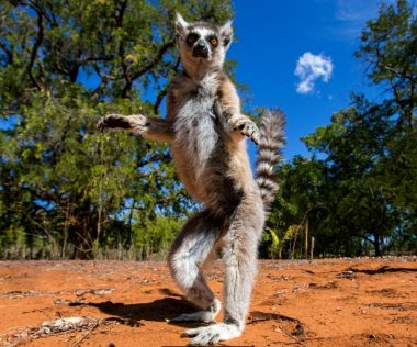 Riszálod? 10 nap MADAGASZKÁR, 4 csillagos hotellel, reggelivel és repjeggyel: 307.700 Ft-ért!