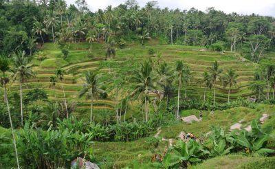 171. nap: Gunung Kawi, Tirta Empul és a Tegallalang rizsföldek
