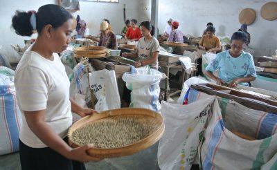177. nap: Ilyen egy jávai kávé- és kaucsuk feldolgozó üzem