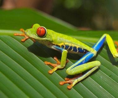 10 nap Costa Rica, San José, 4 csillagos szállással, reggelivel és repjeggyel