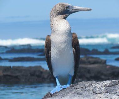 11 nap a páratlan szépségű Galapagos-szigeteken!