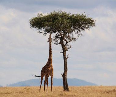 Különleges utazás: 11 nap Kenya szállással és repülővel 179.900 Ft-ért!