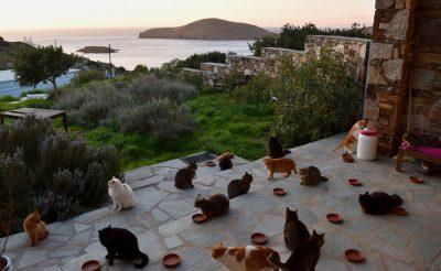 Meghirdették a világ egyik legjobb állását! Egy görög szigeten kell macskát simogatni és még fizetnek is érte!