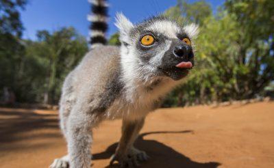 Egy elszigetelt világ: Madagaszkár, a titokzatos nyolcadik kontinens!
