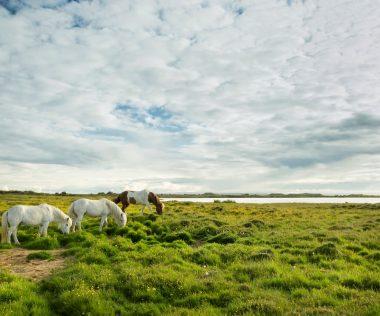 17 meglepő tény Izlandról