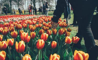 Ide utazz tavasszal, ha Te is rajongsz a tulipánokért!