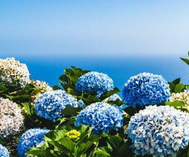 Portugál csoda: 8 nap Madeira, szállással és repjeggyel: 75.200 Ft-ért!