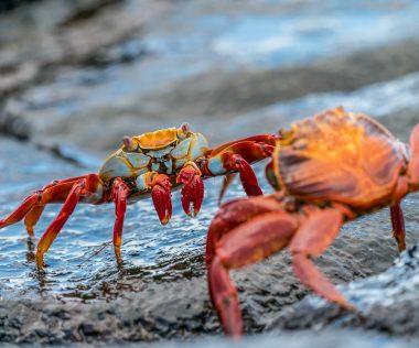 Álomnyaralás a páratlan szépségű Galapagos-szigeteken, 4 csillagos szállással és repjeggyel: 495.300 Ft-ért!