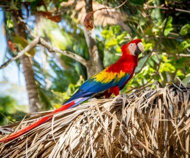Kedvenc országunk: 10 nap Costa Rica, szállással és repülővel: 263.150 Ft-ért!