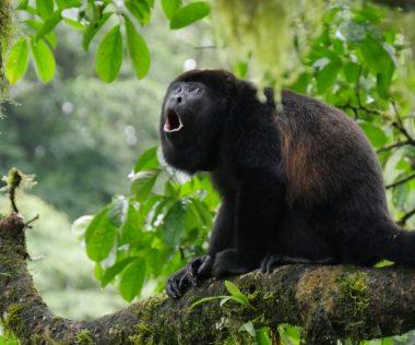 A legjobb hely ahová most utazhatsz: 11 nap Costa Rica 240.000 Ft-ért!
