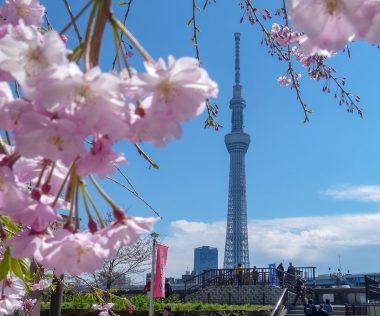 Bakancslistás: Japán a cseresznyefa virágzás idején! 10 nap Tokió, ingyenesen lemondható szállással: 267.750 Ft-ért!