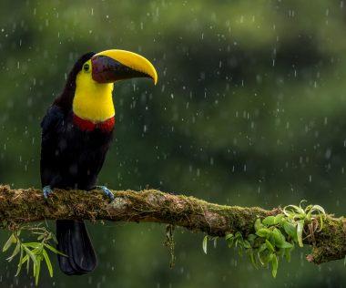 10 nap Costa Rica, San José, 4 csillagos medencés szállással és repjeggyel: 315.650 Ft-ért!