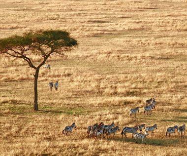 Utazók figyelem! Tanzánia teljesen kitiltja a műanyag zacskót az országból!
