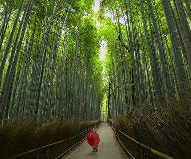 Irány Japán tavasszal: Oszaka, 4 csillagos hotellel és repjeggyel: 245.050 Ft-ért!