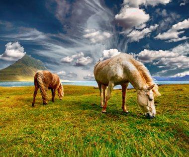 Nézd meg ezt a csodát a saját szemeddel: 8 nap Izland 75.280 Ft-ért!