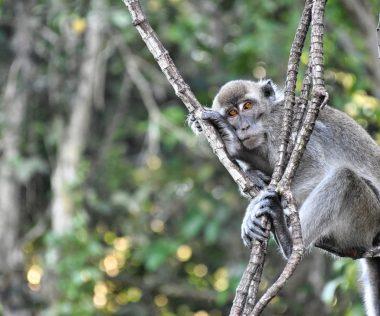 Jártál már trópusi esőerdőben? Irány 10 nap Borneó, 4 csillagos szállással és repjeggyel: 259.100 Ft-ért!