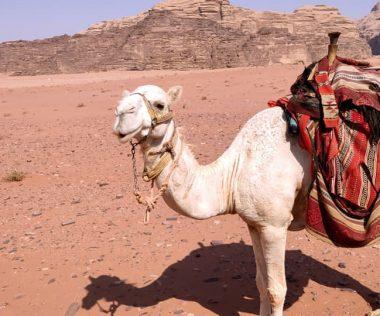 Egy hét Amman, Jordánia szállással és repülővel 54.700 Ft-ért! Vár a Vörös-tenger, Holt-tenger, Rum vádi, Petra!