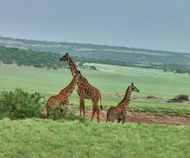 10 napos afrikai utazás: Johannesburg szállással és repülővel 171.850 Ft-ért!