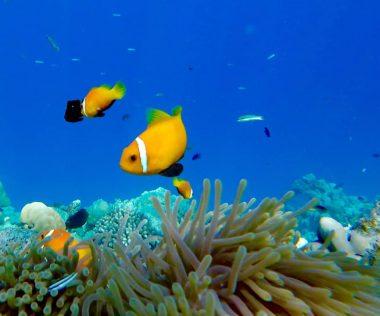 Álomutazás: 11 nap Maldív-szigetek szállással és repülővel 244.200 Ft-ért!