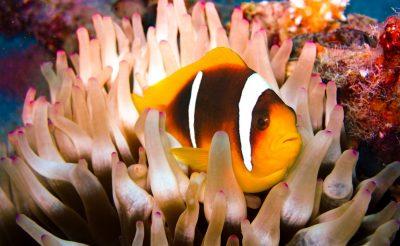 Ezt nézd: Egy hét Egyiptom 4 csillagos aquaparkos hotellel, repülővel 67.515 Ft-ért!