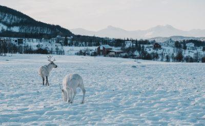Nézd meg, hogy élnek északon, éld át a sarki fényt! Egy hét Tromsø 119.400 Ft-ért!