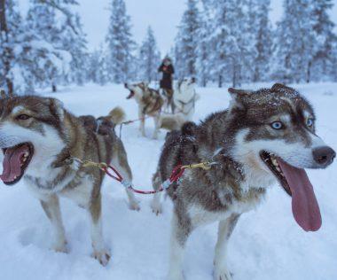 8 nap Norvégia, Lillehammer 112.900-ért! Négy csillagos hotel! Síparadicsom, husky szánozás, jéghotel!