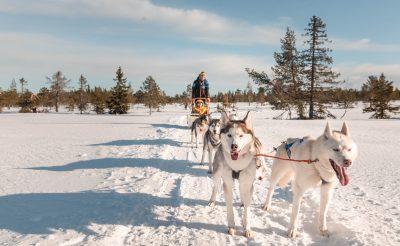 Meglepően jó síelési lehetőség Norvégiában! Olcsó repjegy, sípályák, husky szán!