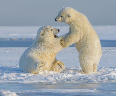 Miért éppen Alaszka? Mert rendkívül olcsó jövő tavasszal, 189.000 Ft!